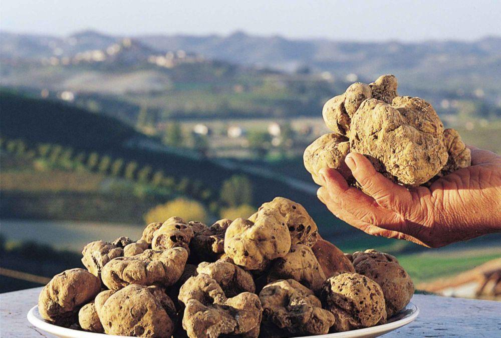 poggio delle ginestre bed & breakfast b&b vacancies house langhe piemonte piedmont italy canelli tartufo truffle